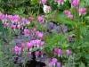 Garden April 2007 026