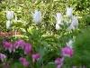 Garden April 2007 028