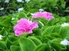 Garden April 2007 055