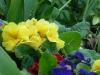Garden April 2007 062