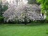 Garden April 2007 063