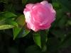 Garden April 2007 070