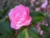Garden April 2007 075