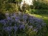 Garden April 2007 082