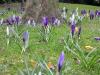 Gardens March 2007 012