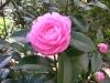 Gardens March 2007 017