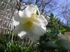 Gardens March 2007 018