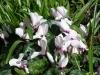 Gardens March 2007 021