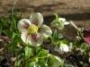 Gardens March 2007 024